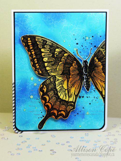 00SCT Butterfly ACope