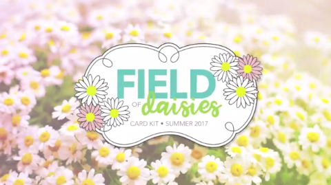 FieldOfDaisies